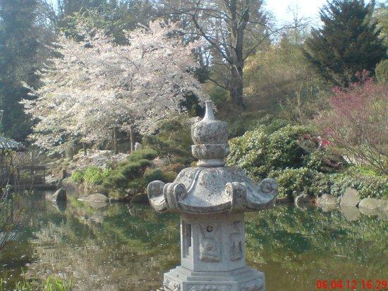 Japanischer Garten (Japanese Garden) : Frühlingsblüten