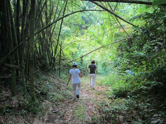 Ambassabeth Eco Lodge : Cunha Cunha Pass