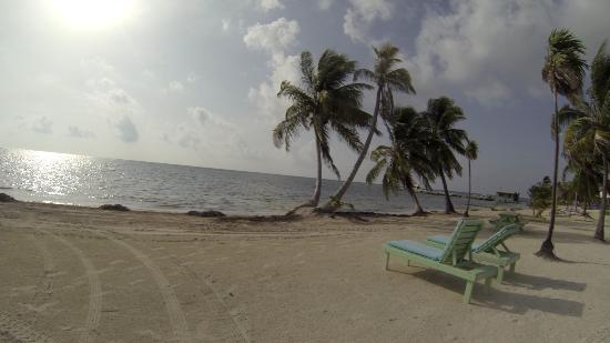 Blackbird Caye Resort: view from a room