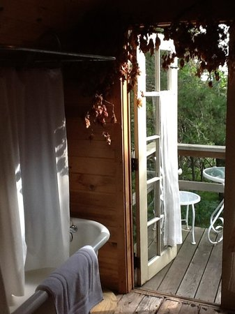 Whiteley Creek Homestead : Out my Kitchen Window Cabin