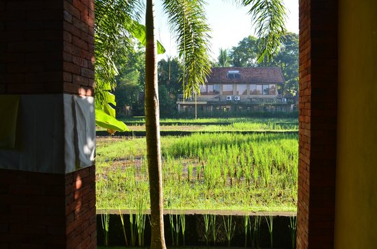 Ubud Lestari Bungalows: View on the rice fields, from the porch