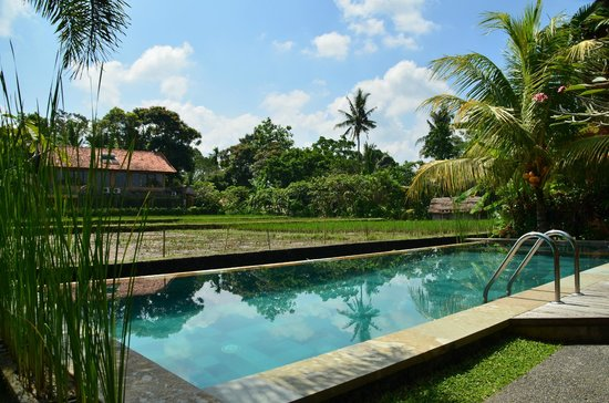 Ubud Lestari Bungalows: View from the sundeck, at the pool