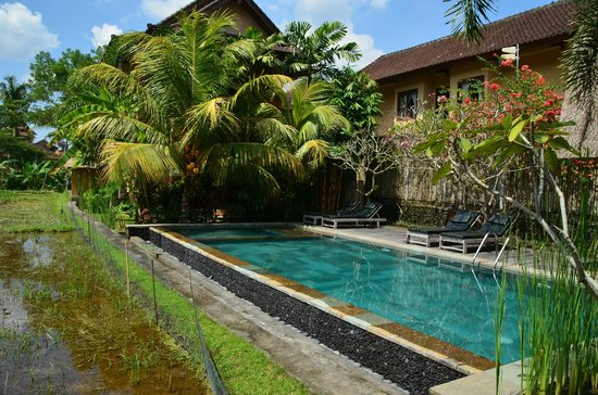 Ubud Lestari Bungalows: View on the pool and our room behind it