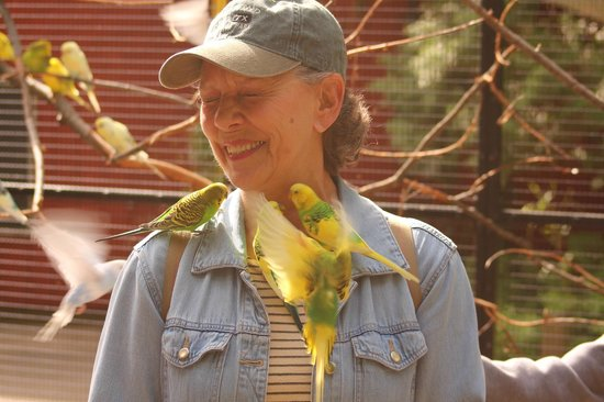 John Ball Zoo: My wife accosted by carnivorous parakeets