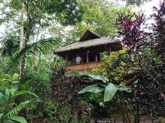 Copa De Arbol Beach And Rainforest Resort The Balsa Cabin