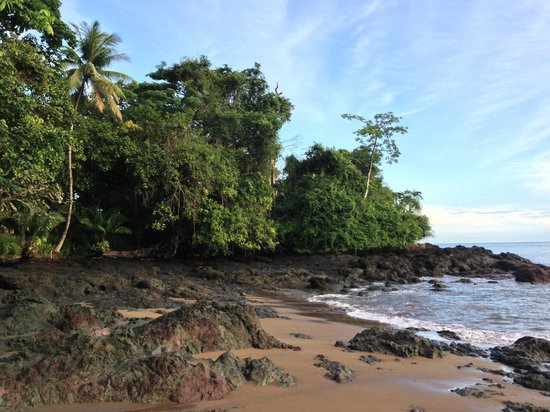 Copa de Arbol Beach and Rainforest Resort: Beach in front of the resort