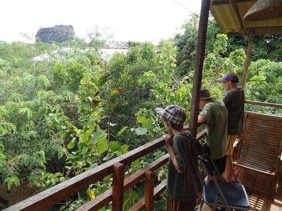 Thick Forest: Blick auf den Sigiriya Rock