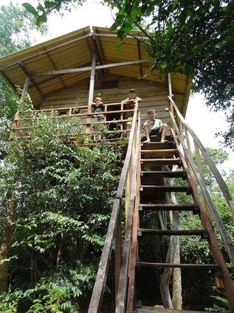 Thick Forest: Hoch oben ...