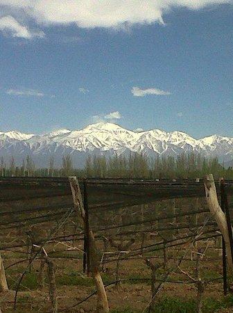 Agrelo, Argentina: Vista al oeste