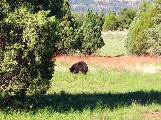 Foto De Jard N De Los Dioses Colorado Springs Goat Herd Tripadvisor