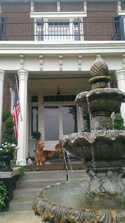 1851 Historic Maple Hill Manor Bed & Breakfast: Super friendly pups hanging out on the porch