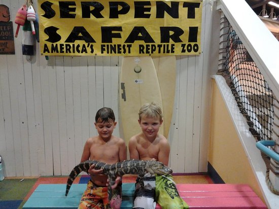 KeyLime Cove Indoor Waterpark Resort : loved holding baby gator