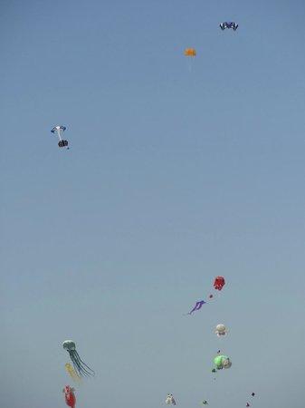 Camping La Forêt : Kites