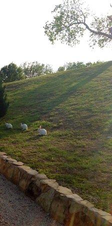 Elm Creek Manor: Runaways high tailing it up the ridge