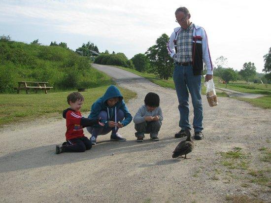 Camping Bon-Desir: Good morning duck