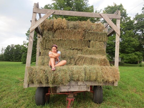 Rosebarb Farm: freshly picket up hey