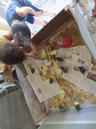 Rosebarb Farm: feeding babies