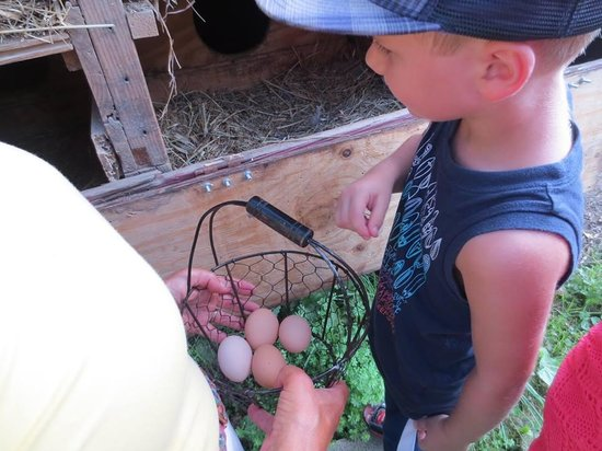 Rosebarb Farm: eggs for breakfast