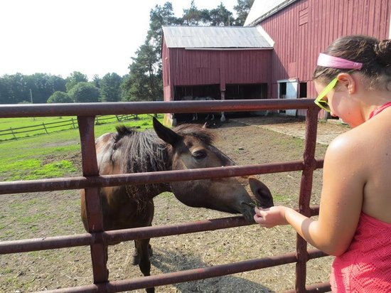 Rosebarb Farm: she loved horses