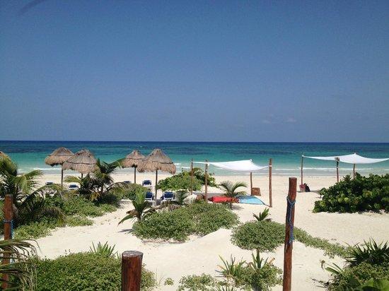 Almaplena Eco Resort & Beach Club: View from Almaplena Restaurant