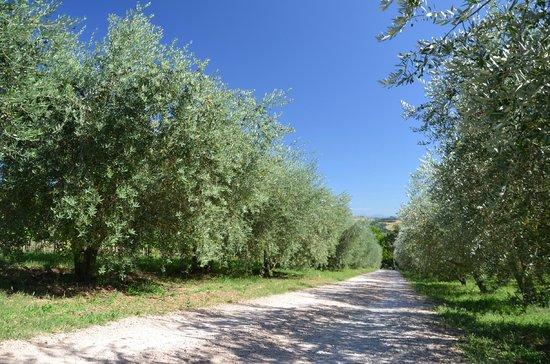 Agriturismo Casale dei Frontini : de oprijlaan