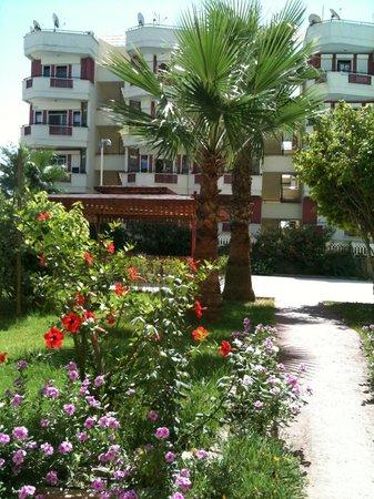 Alanya Kalesi (Castle): Palmen gibt es auch überall