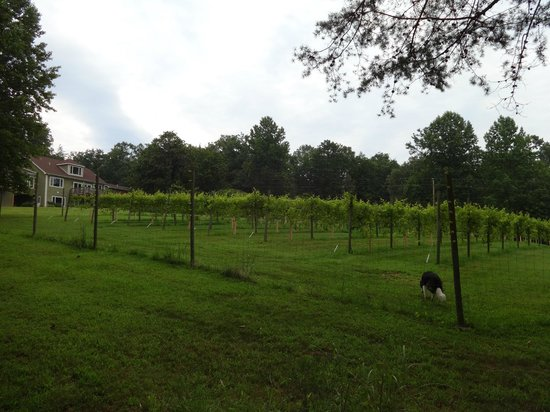Arcady Vineyard Bed & Breakfast : Vineyard