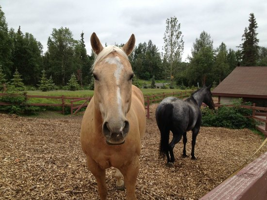 "Alaska Sundance Retreat Bed and Breakfast, LLC: ""Champ"" & ""Little Blue Music"" - I call them ""Butterscotch"" & ""Banjo"""