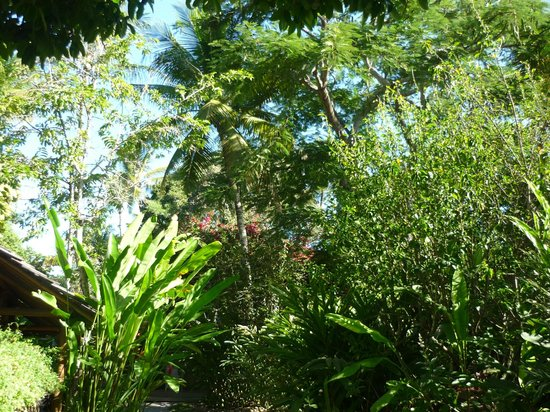 Pousada Capim Santo: Jardim da Pousada