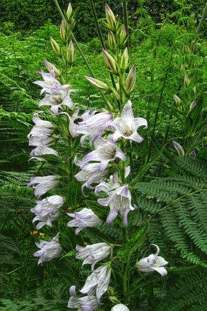 High Force Waterfall: rare flowers ?