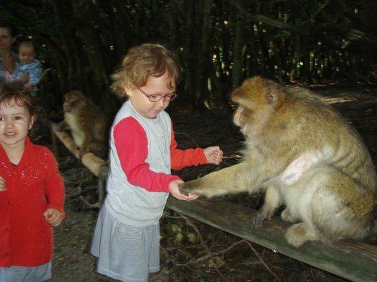 Affenberg Salem: Les enfants donnent à manger aux singes sans risque