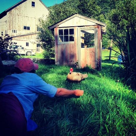 Turquoise Barn: Duck feeding by the pond