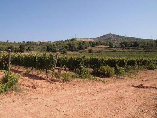 Finca Viladellops: View on the vines