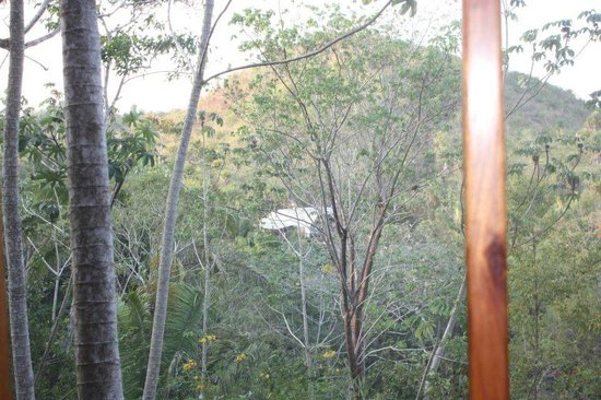 Mariposa Jungle Lodge: View from our casita