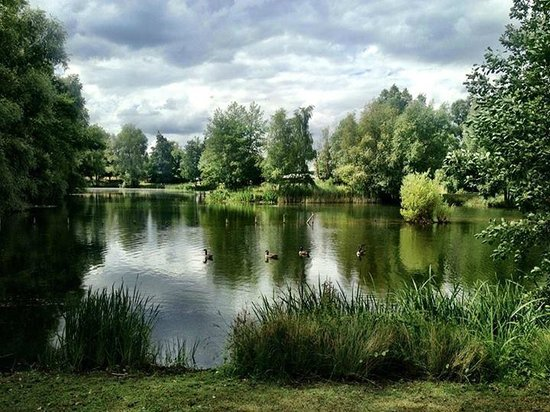 Halliford Mere Lakes & Restaurant: The lakes and park