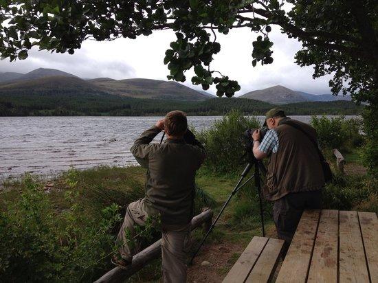 Highland Wildlife & Birdwatch Safaris: Out & About