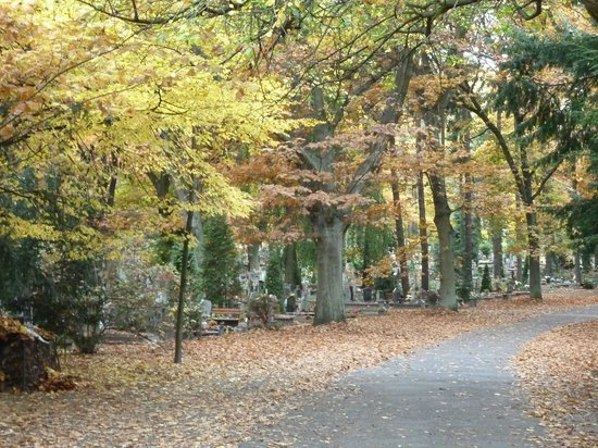 Central Cemetery: way