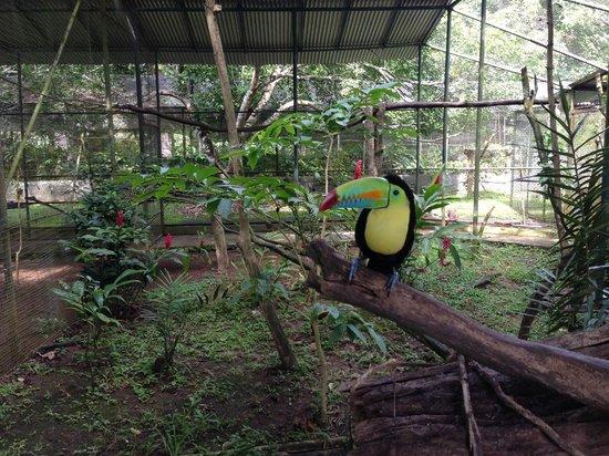 Summit Botanical Gardens: Exotic Bird