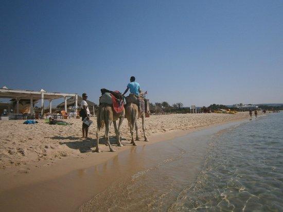 smartline Hammamet Regency: Пляж