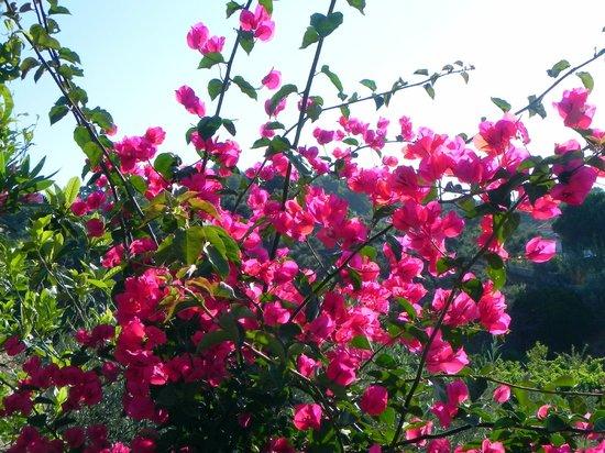 Filia Studios & Apartments: More beautiful flowers around the studios