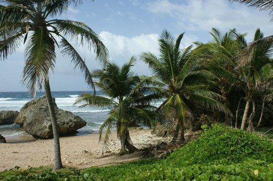 Bathsheba Beach: Beach and surroundings