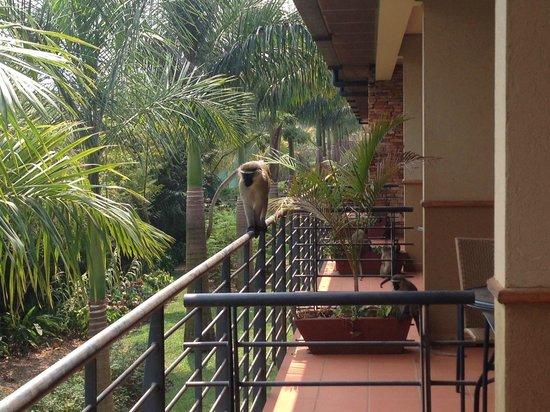 Munyonyo Commonwealth Resort: Monkeys on the balcony