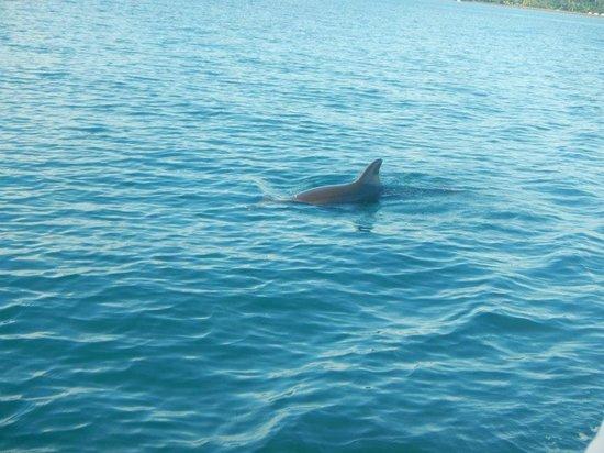 Cabinas Jimenez: delfin