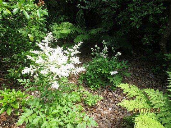 Asticou Azalea Garden: garden