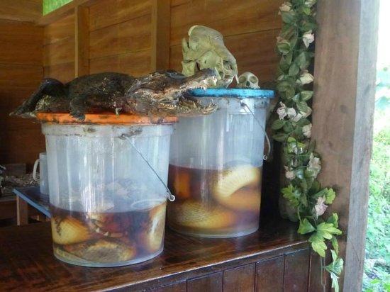 Ecoaventuras Amazonicas: Serpientes increibles ...