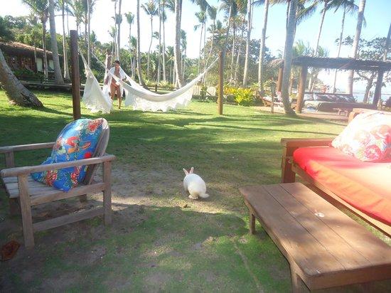 Pousada do Baiano: coelho branco no jardim