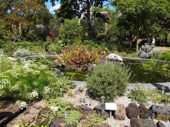 Chelsea Physic Garden: 整備された庭園