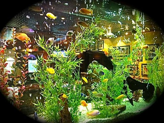 how to make a beautiful fish tank