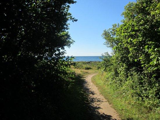 Beach Plum Resort: trail to the beach