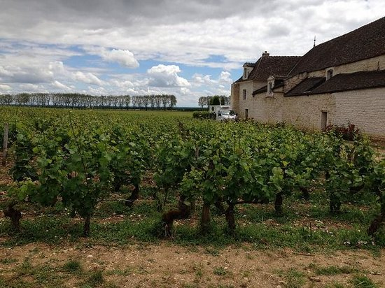 Château de Pommard : The vineyards